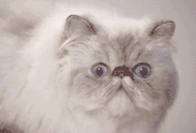 Tumblr: Quand mon chat... [gif]